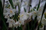もうすぐ初春・・