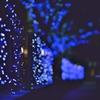 イルミネーションの季節  ~cool_blue_club~