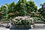 「カメラ女子と薔薇の園」