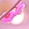 「薄暮に咲く」