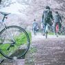 櫻舞い散るサイクリングロード