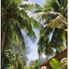 パラオ・カープ島その2