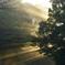 木漏れ日に霧中