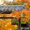 化野念仏寺2015の3
