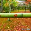 雨そして竹と紅葉