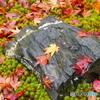 苔と石と散紅葉