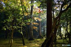 静かなる森の中で