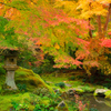 京都散策、瑠璃光院錦庭