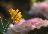 SIGMA SIGMA SD1 Merrillで撮影した(春の気配)の写真(画像)