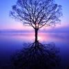 Illusion in blue2014