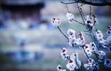 『 名のみの春 』