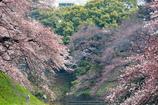 桜・2016・4