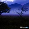 湿原の夜明け3