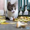 秋の枯葉の中、元気に遊べ!
