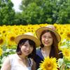 ひまわり畑の花達
