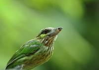 CANON Canon EOS 7D Mark IIで撮影した(緑の平穏)の写真(画像)