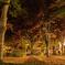 中庭の晩秋