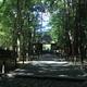 夏の法然院1(参道と山門)