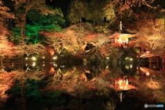 2016秋景色6(紅葉ライトアップ 醍醐寺)