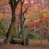 秋色の彩天