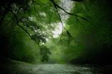 神々が宿る森の清流(番外編)