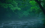 神々が宿る森の清流