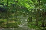 木もれ日・・新緑の輝き