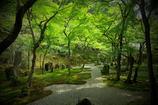 光明禅寺「緑のシャワー」