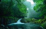 神々が宿る森の清流②