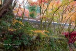 晩秋の横蔵寺 3