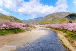 河津 春景色