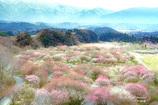 春彩の苑 Ⅰ