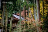 晩秋の横蔵寺 9
