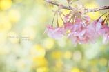 春に恋して・・・