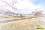 春の木曽川河川敷