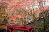 晩秋の横蔵寺 1