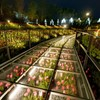 Flower Valley of night - 2