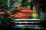秋の横蔵寺 5