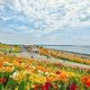 大阪湾に咲く花
