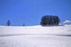 春を待つ丘