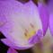 秋に咲く花 #1