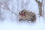 大雪の中よく来たね!