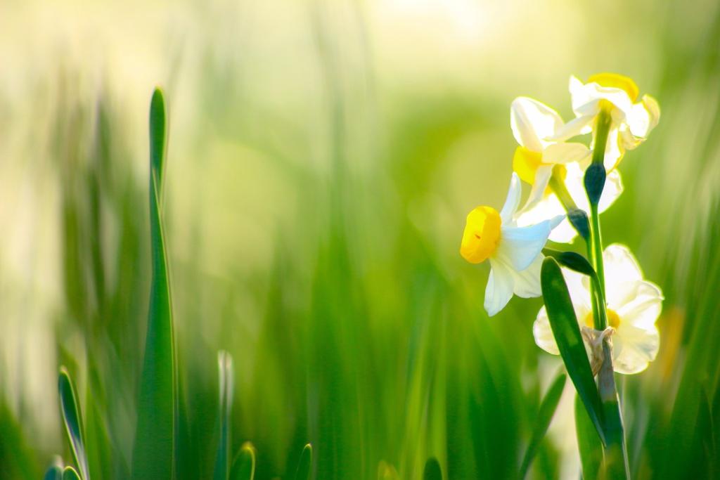 春の音色を奏でよう♫