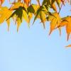 ほんのり秋色