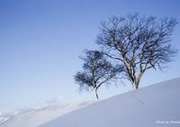 CANON Canon EOS 6Dで撮影した(2本の木がある風景5)の写真(画像)