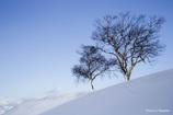 2本の木がある風景5
