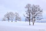 冬の牧場(まきば)