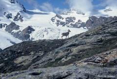 中年登山隊のスイスアルプス風雪流れ旅19