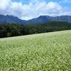 秋蕎麦と戸隠の山