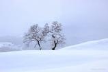 2本の木がある風景B